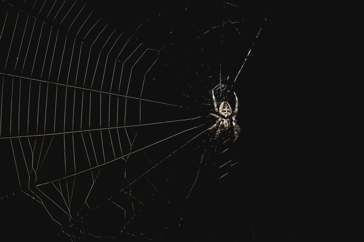 Araignée dans la nuit