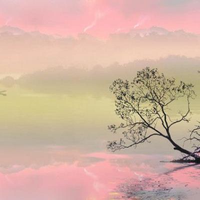 Arbre à l'aube rosée