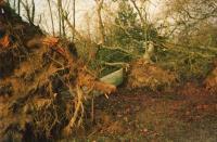 Arbre déraciné-Tempête 1999
