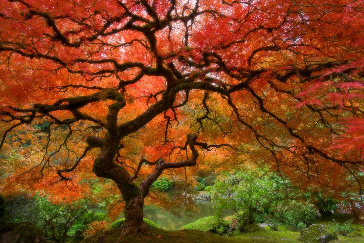 Arbre rouge sur végétation verte