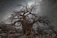Arbre sans feuilles dans nuit