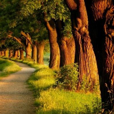 Arbres merveilleux bordant chemin