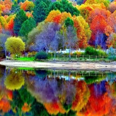 Arbres multicolores et leur reflet dans l'eau