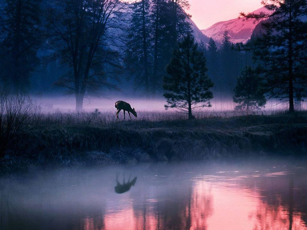 Biche au bord de l'eau la nuit