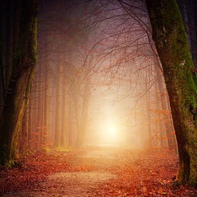 Chemin de forêt vers lumière