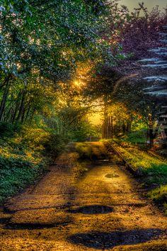 Chemin doré dans forêt