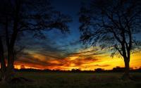 Crépuscule sur arbres sombres