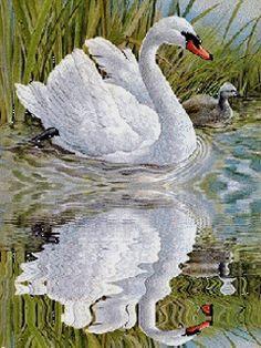 Cygne reflété dans l'eau