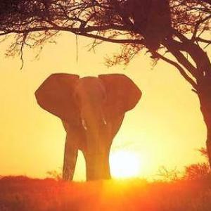 Eléphant au crépuscule lumineux