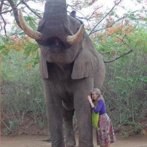 Eléphant et femme