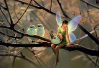 Fée et oiseaux sur branche