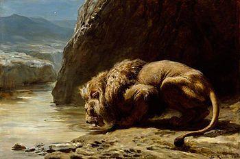 Lion au bord rivière