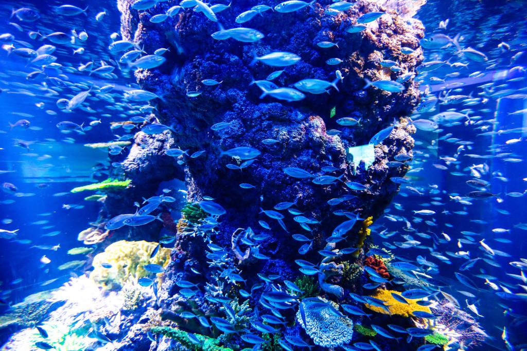 Nuée de poissons bleus
