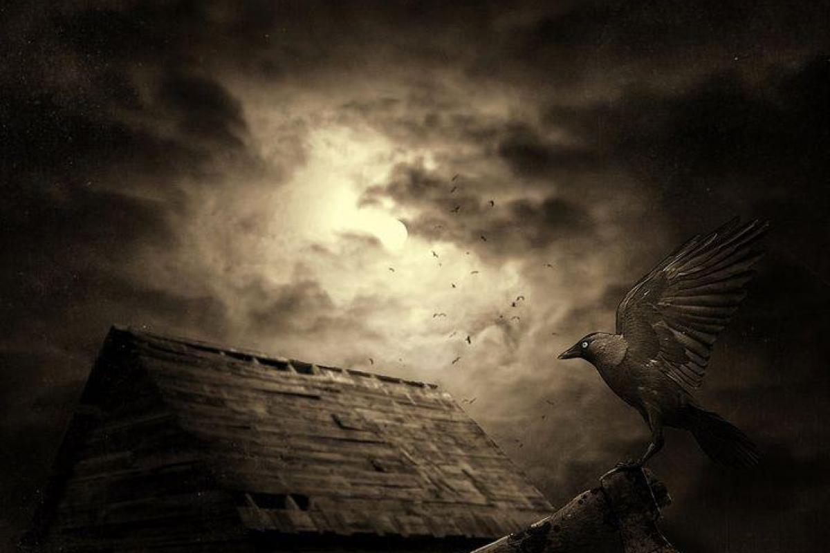 Oiseau de nuit sur toit