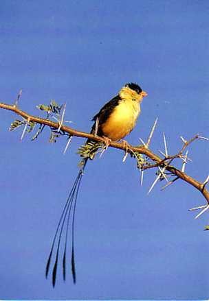 Oiseau sur la branche
