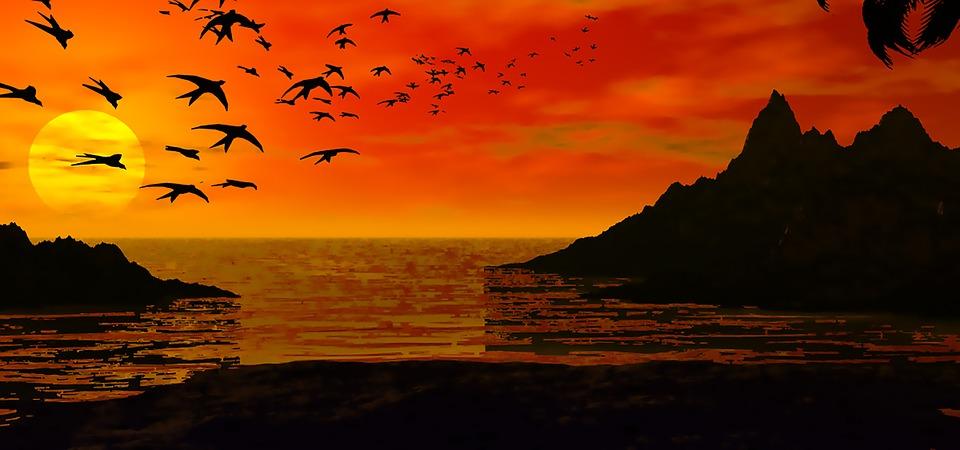 Oiseaux dans ciel crépusculaire