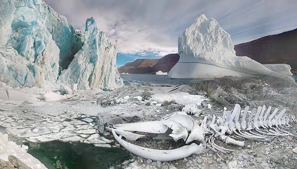 Ossements dans paysage de glace