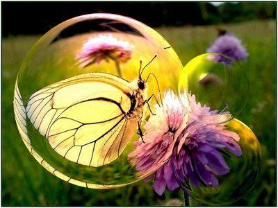 Papillon dans bulle sur fleur