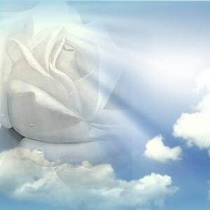 Rose blanche dans ciel
