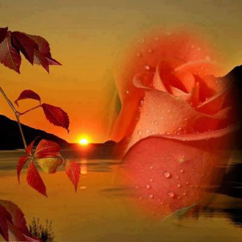 Rose géante au coucher du soleil