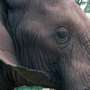 Visage d'éléphant