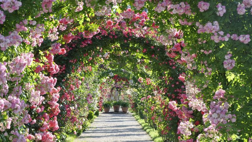 Voûte de roses